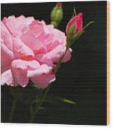 Bud of rose Wood Print