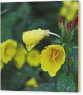 Budding Friends - Missouri Primrose Wood Print
