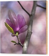 Budding Magnolia Wood Print