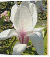 Budding Magnolia Wood Print