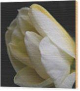 Budding Narcissus Wood Print