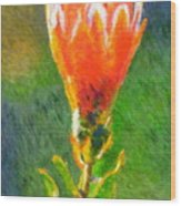 Budding Protea Wood Print