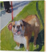 Buddy On A Red Leash Wood Print