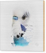 Budgie No 03 Wood Print