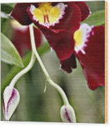 Buds And Blooms Orchid Wood Print