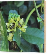 Buds And Blooms Wood Print