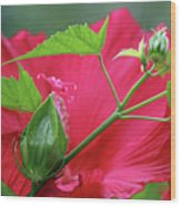 Buds Before Blooms Wood Print