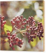 Buds  Wood Print