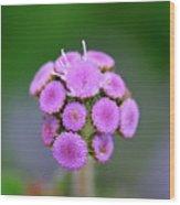 Buds In Purple Wood Print