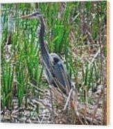 Bue Heron Wood Print