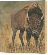 Buff Buffalo  Wood Print