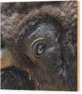 Buff Eye Wood Print