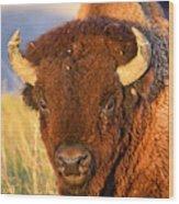 Buff In The Badlands Wood Print