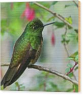 Buff-tailed Coronet Wood Print