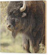 Buffalo Bull Wood Print