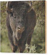 Buffalo Bull II Wood Print