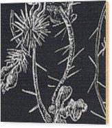 Buffalo Burr And Toad Wood Print