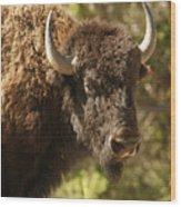 Buffalo Cow Wood Print