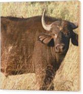 Buffalo Encounter Wood Print
