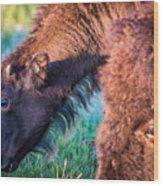Buffalo Family Wood Print