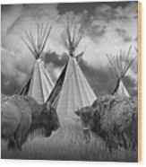 Buffalo Herd Among Teepees Of The Blackfoot Tribe Wood Print