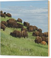 Buffalo Herd Wood Print