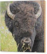 Buffalo In Flowers Wood Print