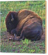 Buffalo In The Badlands Wood Print