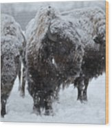Buffalo In The Blowing Snow Wood Print