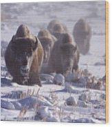 Buffalo In The Fog-signed-##6995 Wood Print