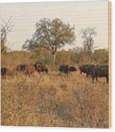 Buffalo In The Timbavati Wood Print