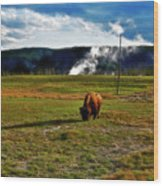 Buffalo In Yellowstone Wood Print
