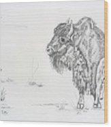 Buffalo Mom And Calves Wood Print