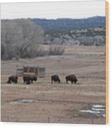 Buffalo New Mexico Wood Print