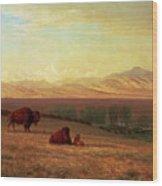 Buffalo On The Plains Wood Print