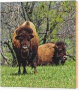 Buffalo Posing Wood Print