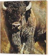 Buffalo Poster Wood Print