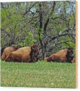 Buffalo Resting In A Field Wood Print