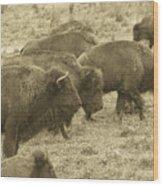Buffalo Roaming Wood Print