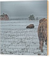 Buffalos In The Snow Wood Print by Barry C Donovan