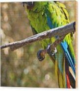 Buffon's Macaw Wood Print