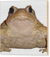 Bufo Bufo European Toad Isolated Wood Print