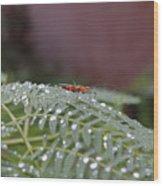 Bug Homestead Wood Print