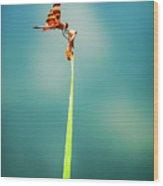 Bug Olympics Xvii Wood Print