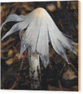 Bug On A Mushroom Wood Print