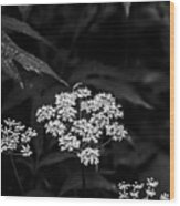 Bug On Flowers Black And White Wood Print