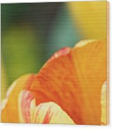 Bug View Of Tulip Wood Print