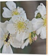 Bugaboo Apple Blossoms Wood Print