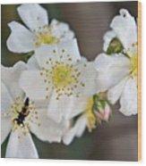 Bugaboo Apple Blossoms Wood Print