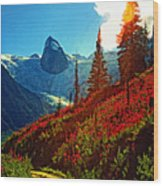 Bugaboos Evening Buzz Wood Print